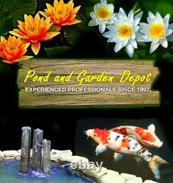 Aquascape Complete 10' x 13' Custom DIY Backyard Pond Kit with Upgraded Pump